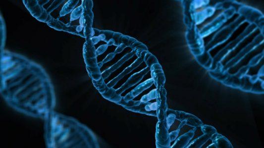 test, badanie genetyczne, zdrowie, nietolerancje pokarmowe, vitagenum, czy warto zrobić test Vitagenum;